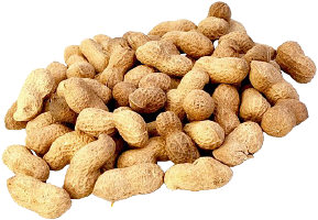 fresh peanuts, not boiled