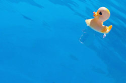 yellow rubber duck swimming pool
